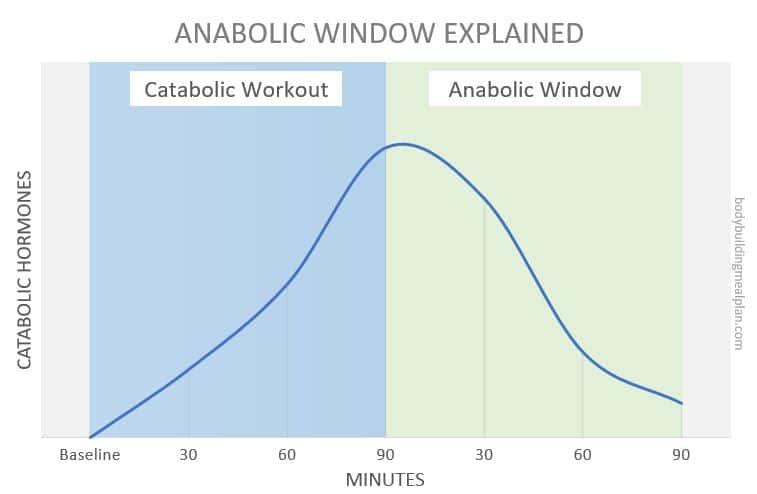 Anabolic Window Explained