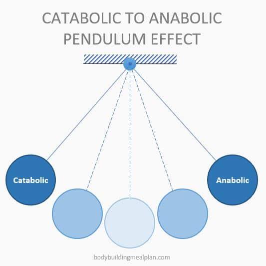 Anabolic Window Pendulum Effect