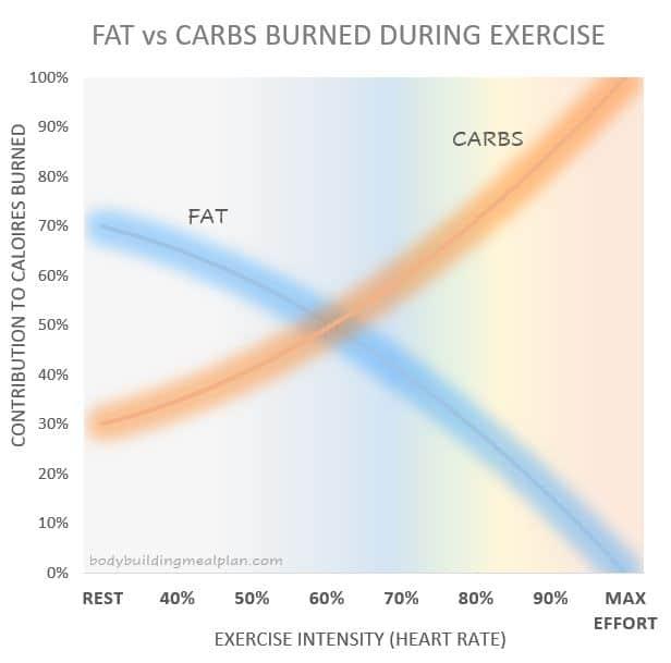 Benefits Of Squats Fat vs Carbs Burned