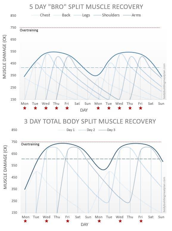 Hypertrophy Training Workout Split