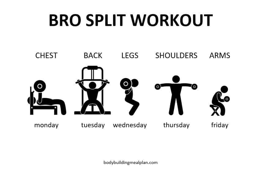Bro Split Workout