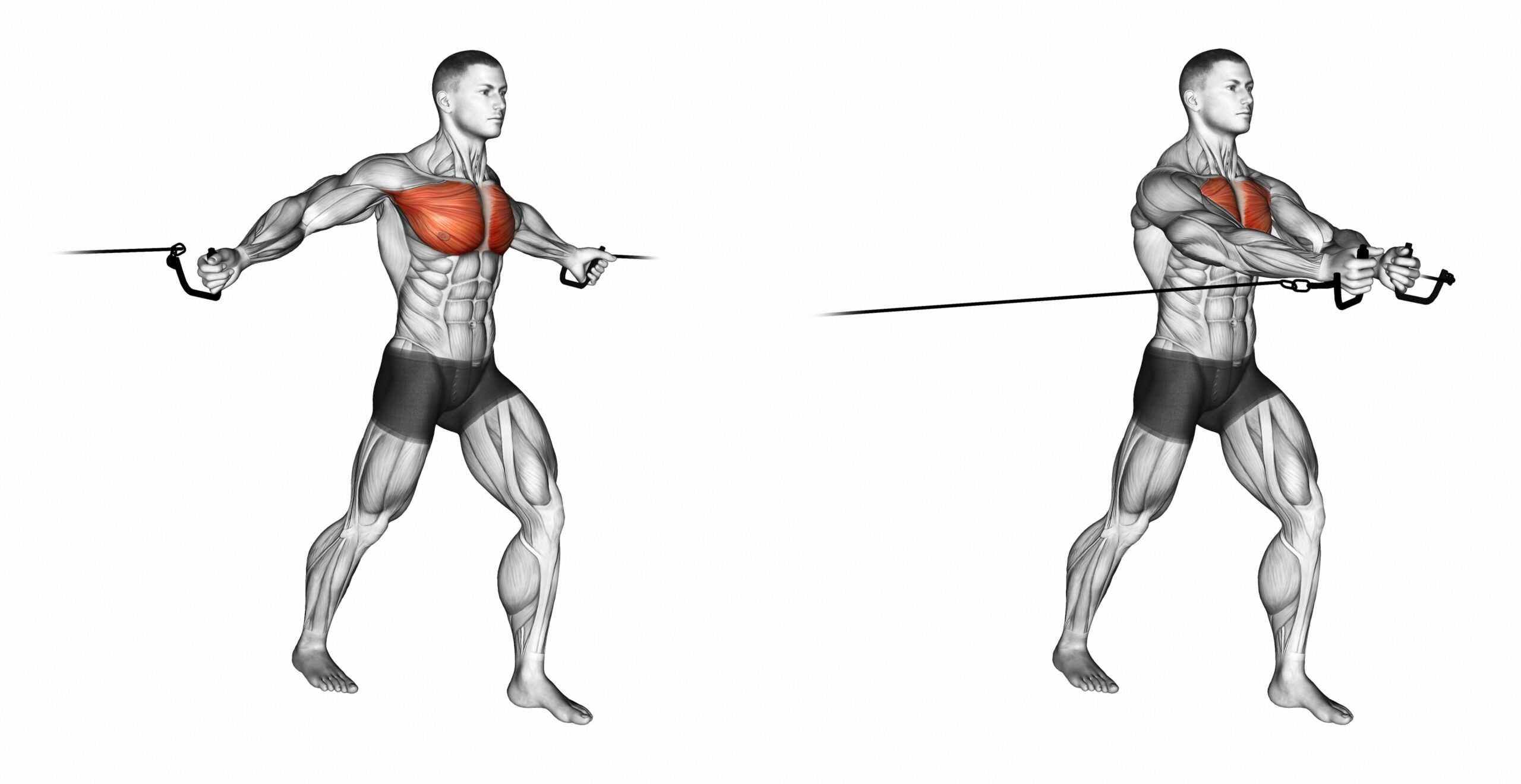 Cable Chest Fly