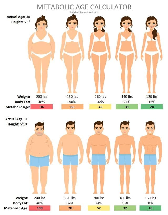 Metabolic Age Calculator For Men and Women