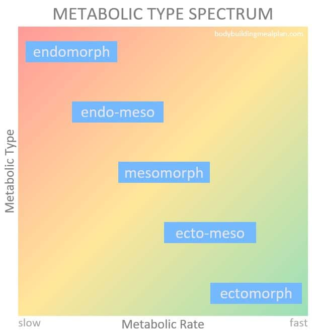 Metabolic Type Quiz Metabolic Rate Spectrum