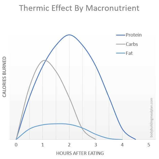 Metabolic Type Quiz Thermic Effect of Food