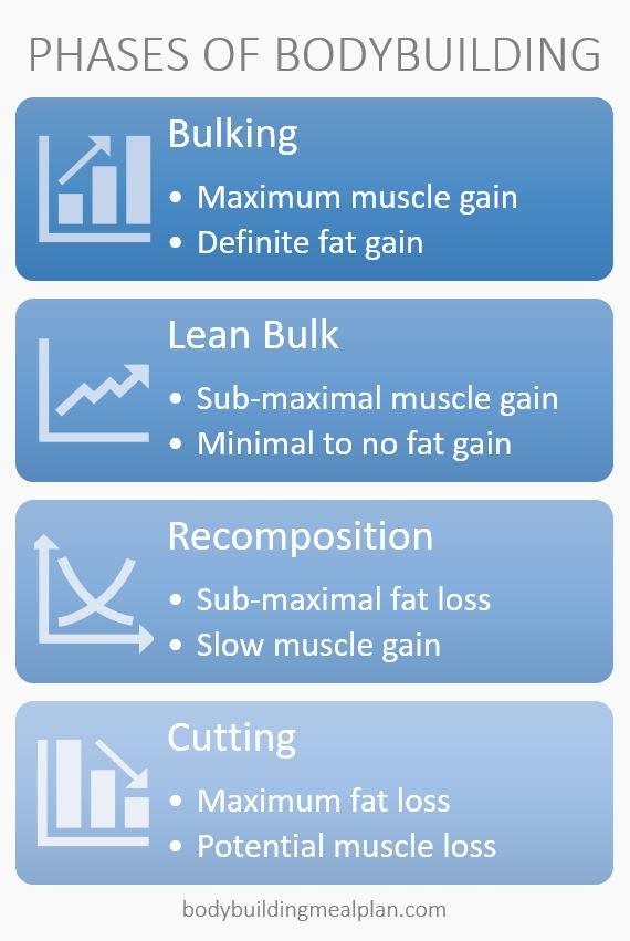 phases of bodybuilding lean bulk