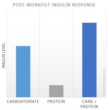 Anabolic Window Insulin Response