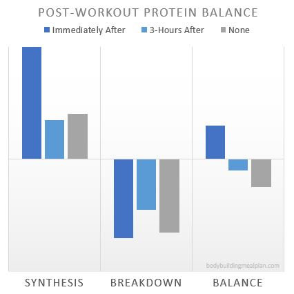 Anabolic Window Protein Synthesis