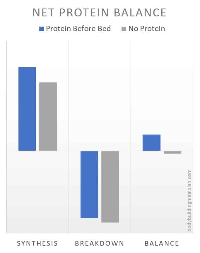 Protein Shake Before Bed Net Protein Balance