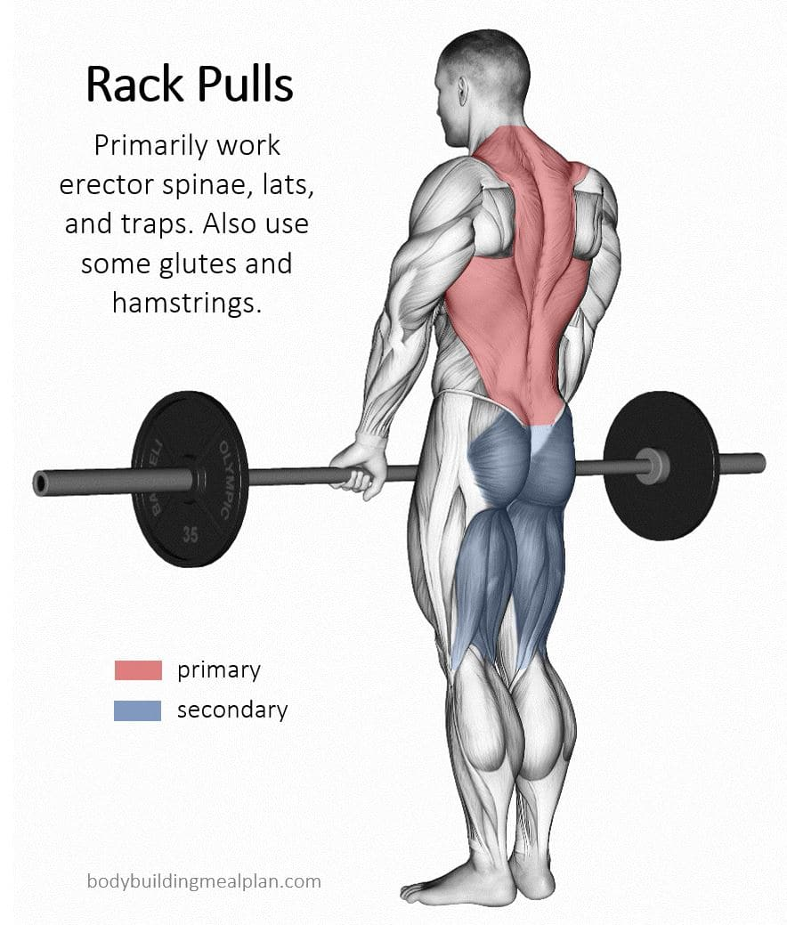 Rack Pulls Muscles Worked