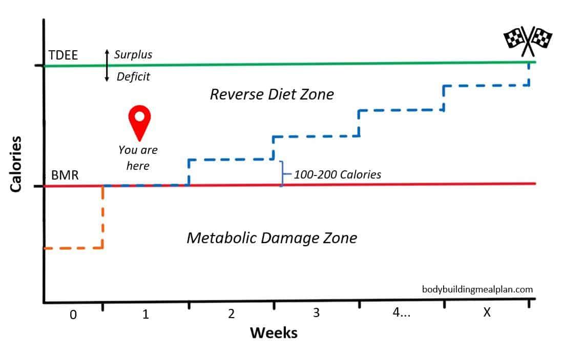 Reverse Dieting Calculator 2