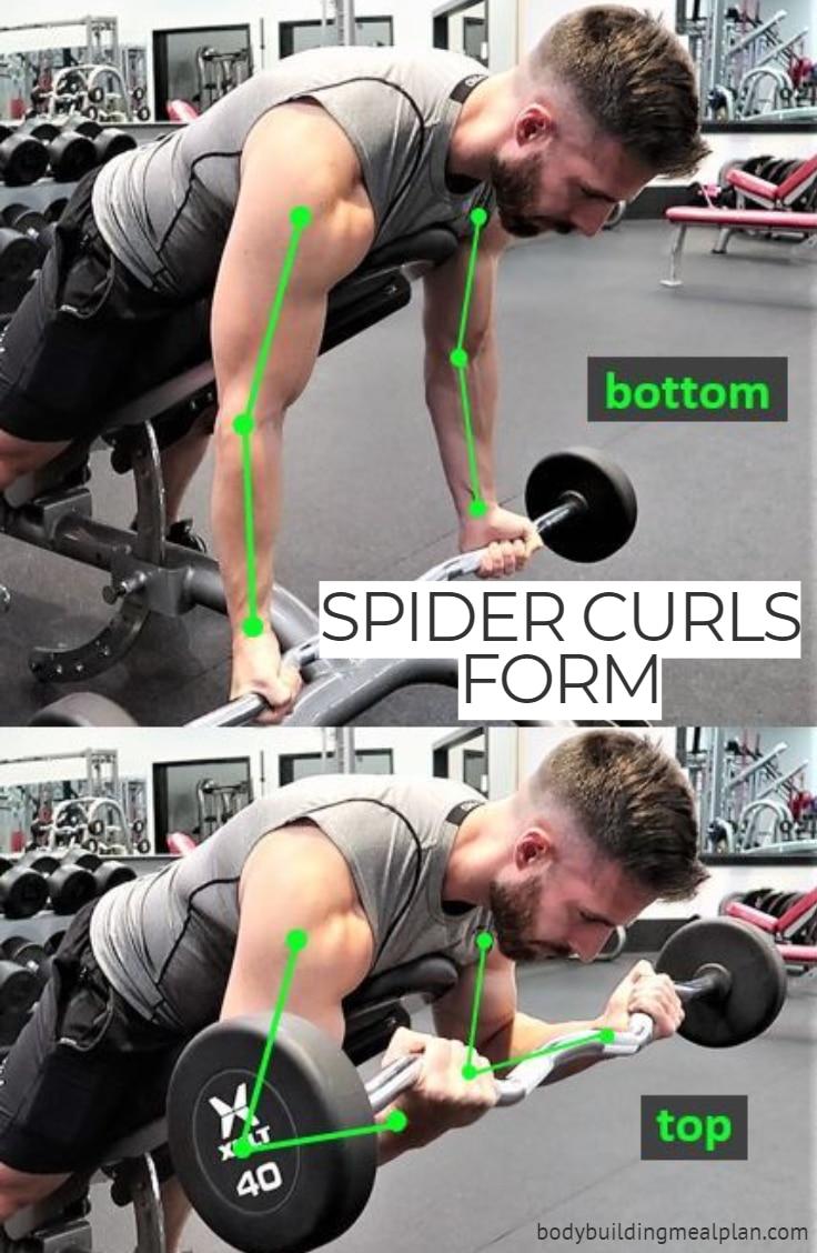 Spider Curl Form