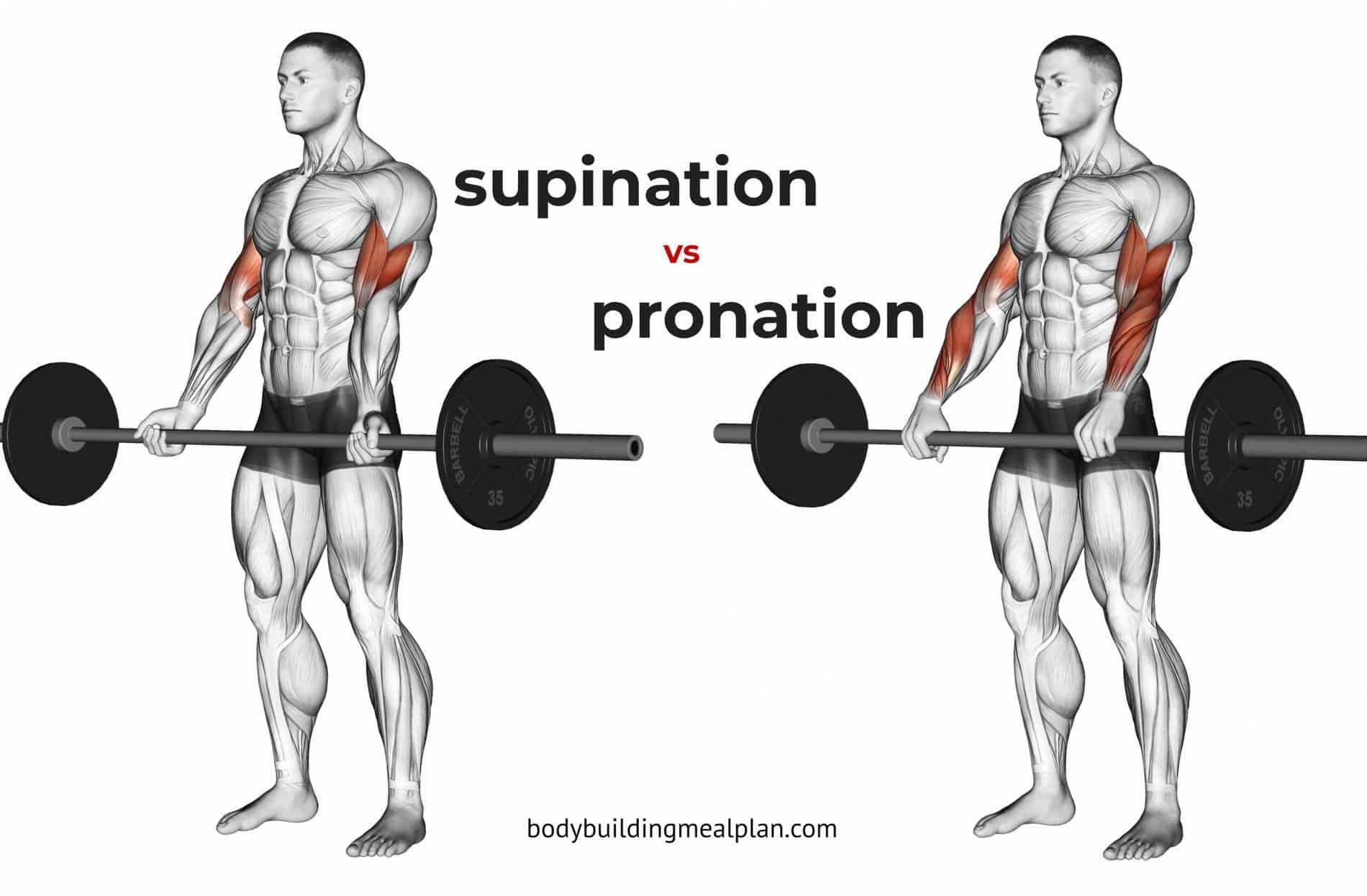 Supination vs Pronation Hand