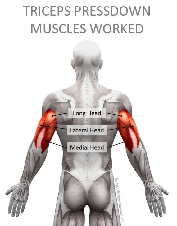 Triceps Pressdown Muscles Worked