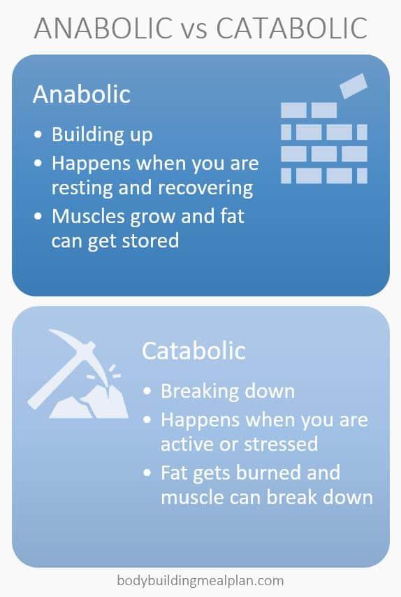 lean bulk anabolic vs catabolic
