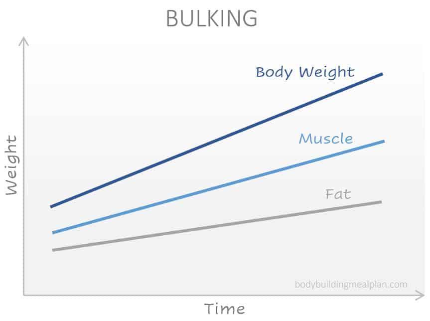 bulk vs cut - bulking