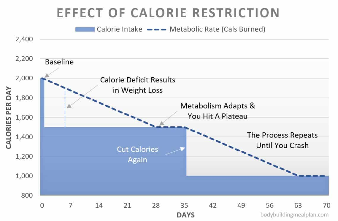 effect of calorie restriction - metabolic confusion