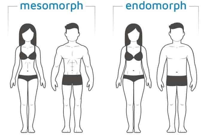 endo meso body type