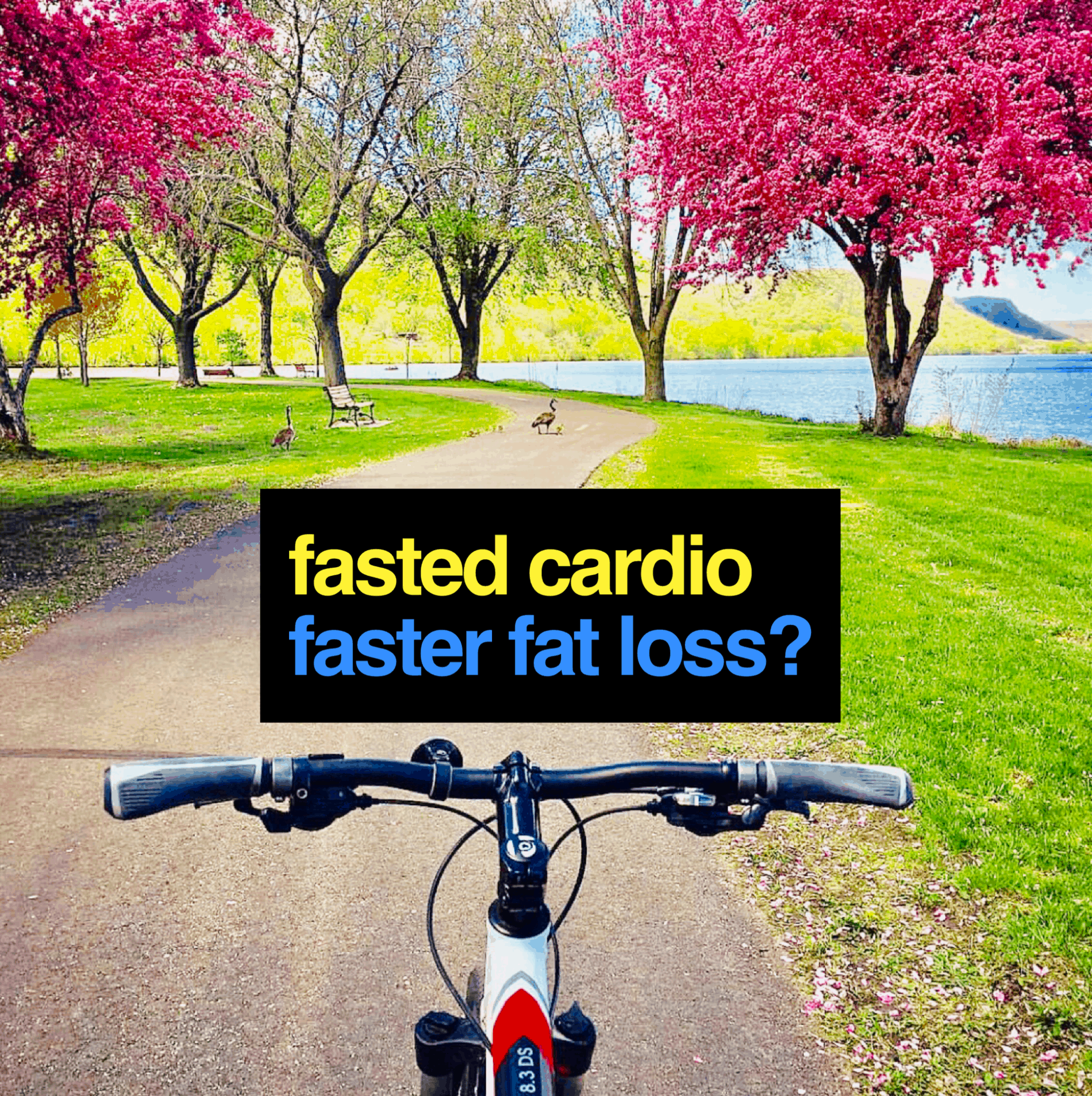 fasted cardio faster fat loss?