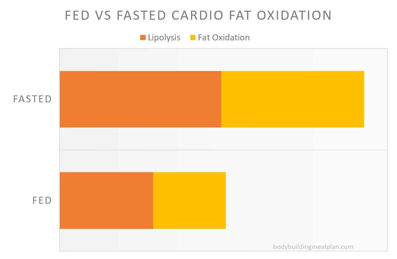 fasted cardio fat oxidation
