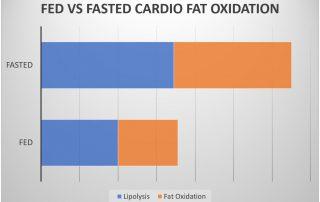 fasted cardio vs fed fat oxidation