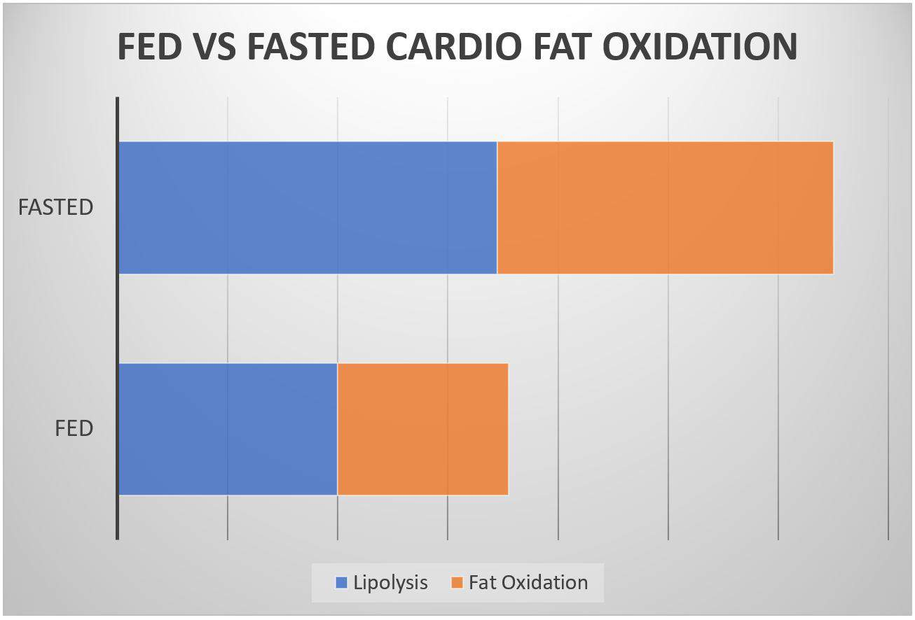 fasted cardio fat oxidation