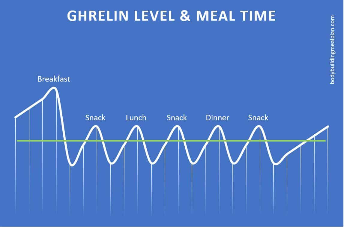 ghrelin level with frequent meals