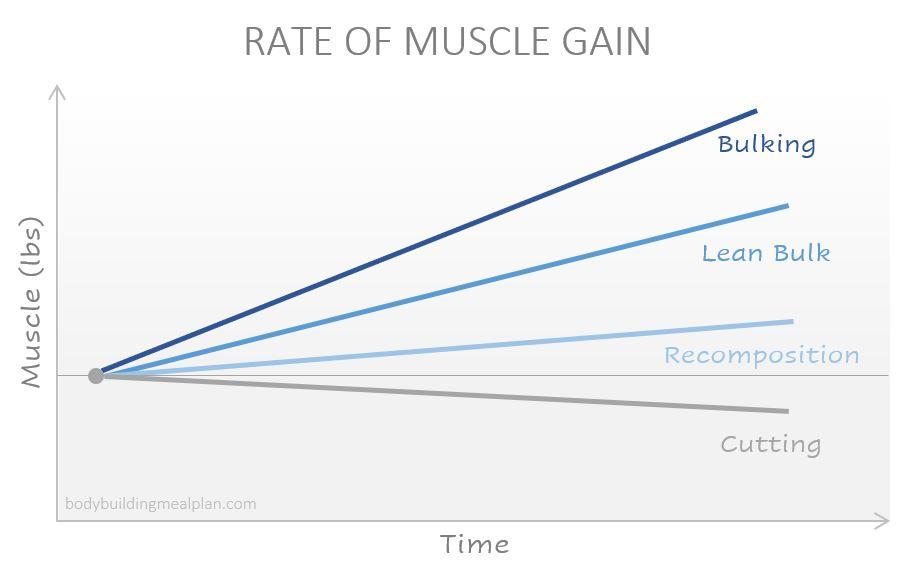 lean bulk rate of muscle gain