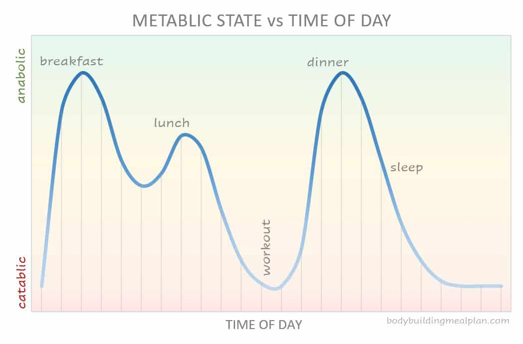 metabolic state vs time of day