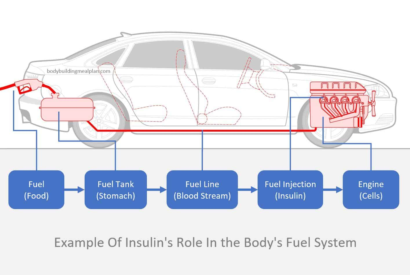 role of insulin in body fuel system