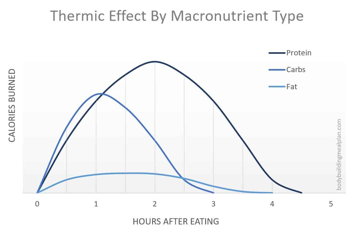 macro calculator thermic effect of protein